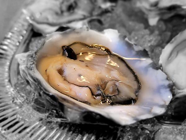 Montevertine Dinner, Oyster