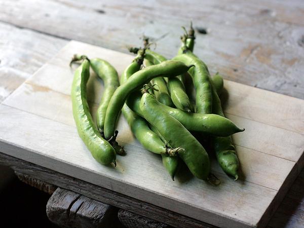 Fava Beans, pods