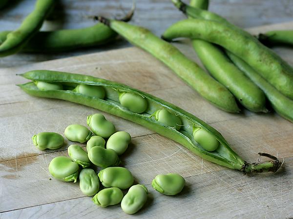 Fava Beans, shucking