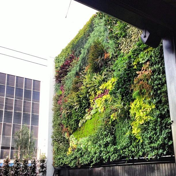 Goldie's, LA - garden wall