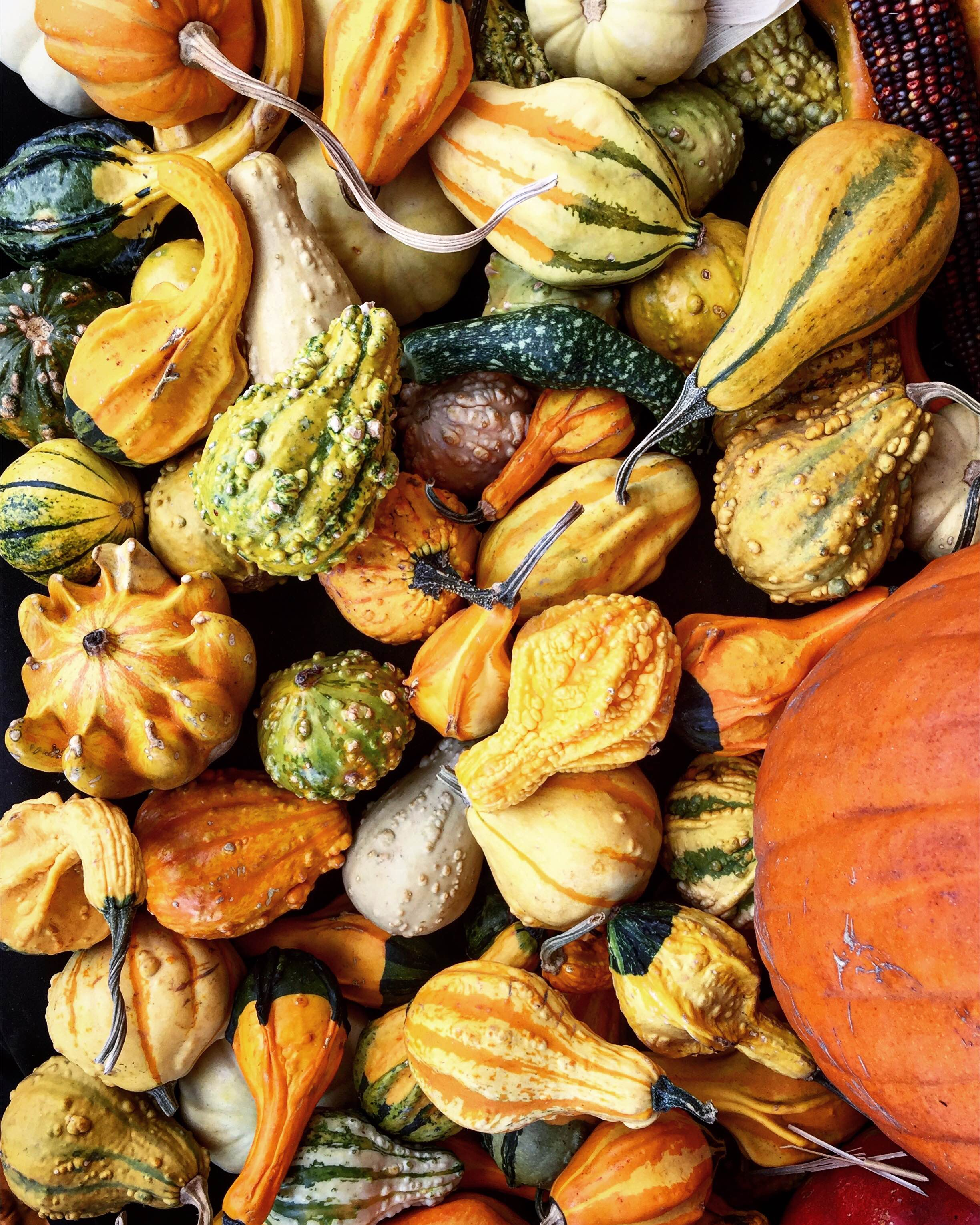 colorful gourds and pumpkins for Fall